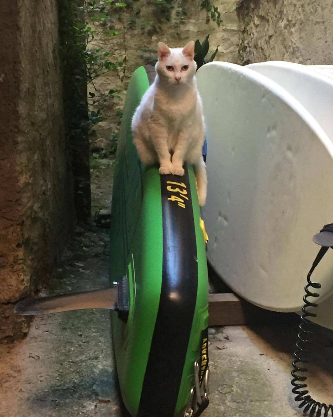Cat-Oar-Board-Rower