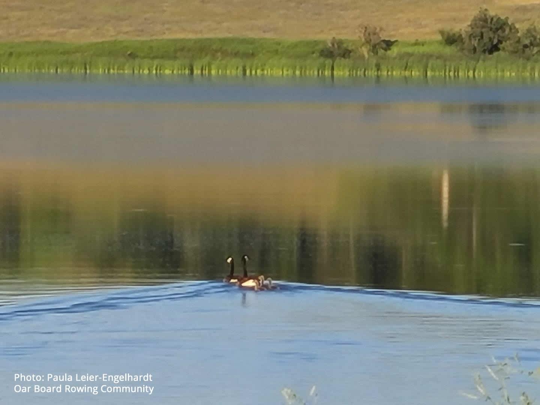 Paula-Leier-Engelhardt-Oar-Board-SUP-Rowing-Community-July-7-2020-2